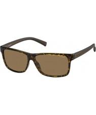 Polaroid Herre pld2027-s M31 ig havana brune polariserede solbriller