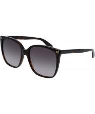 Gucci Ladies gg0022s havana solbriller