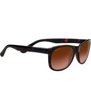 Serengeti 8671 anteo toroiseshell solbriller