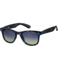 Polaroid Pld6009-nm sek Z7 Havana blå polariserede solbriller