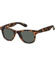 Polaroid Pld6009-ns SOG rc havana appelsin polariseret solbriller